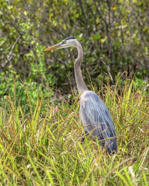 Photograph - Blue Heron by John M Bailey