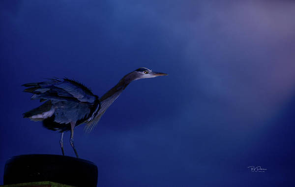 Photograph - Morning Blue by Bill Posner