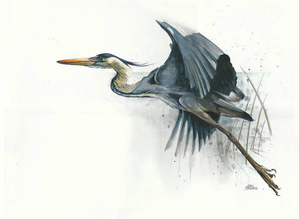 Water Foul Painting - Blue Heron by Marc Brawner