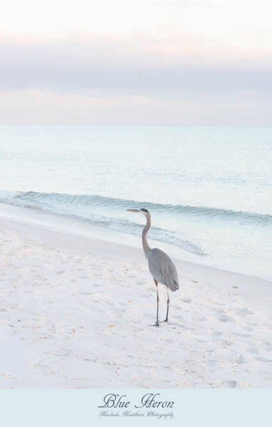 Photograph - Blue Heron by Mechala Matthews