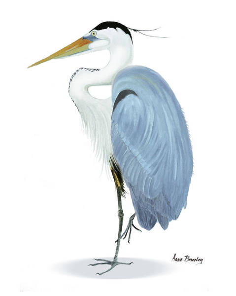 Painting - Blue Heron With No Background by Anne Beverley-Stamps
