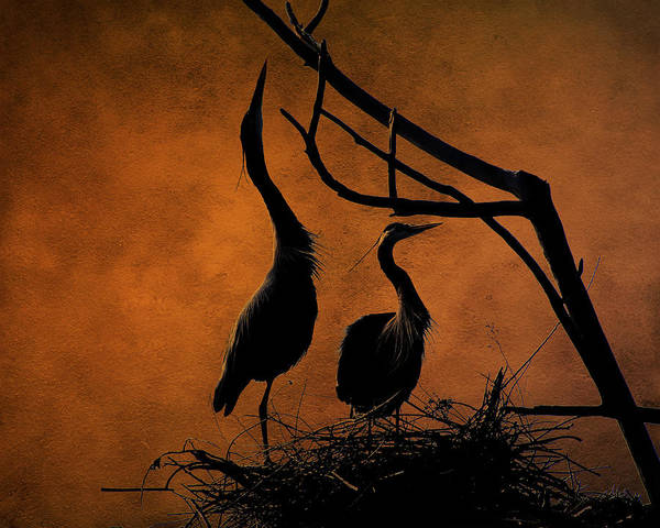 Heron Mixed Media - Blue Herons Nesting At Twilight by Lowell Monke