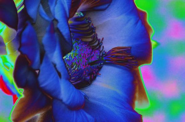 Wall Art - Photograph - Blue Hibiscus by Richard Henne