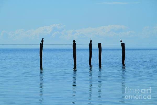 Photograph - Blue Horizon by Stephen Mitchell