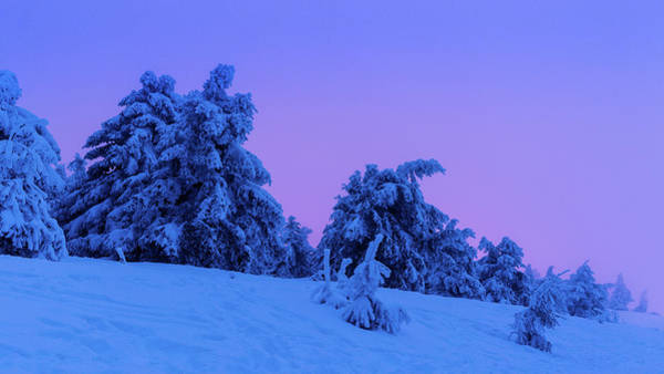Photograph - Blue Hour by Andreas Levi