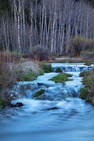 Photograph - Blue Hour Streaming by James BO Insogna