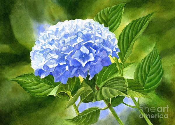 Blue Hydrangea Blossom With Background 2 Art Print
