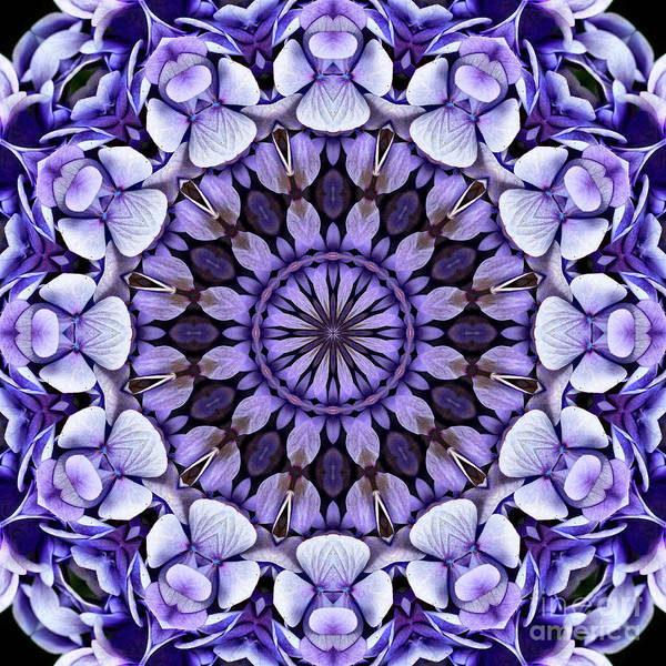 Digital Art - Blue Hydrangea Flower Petals Abstract by Smilin Eyes  Treasures