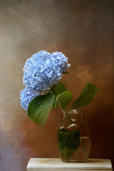 Flowers In A Vase Photograph - Blue Hydrangea In A Vase by Jai Johnson