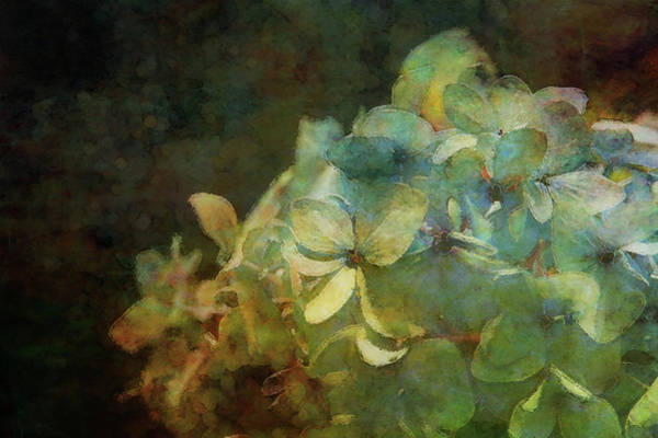 Photograph - Blue Hydrangea Sunset Impression 1203 Idp_2 by Steven Ward