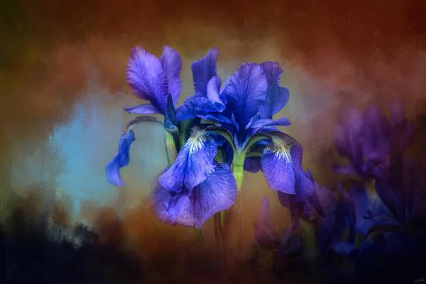 Photograph - Blue Iris Blooms by Jai Johnson