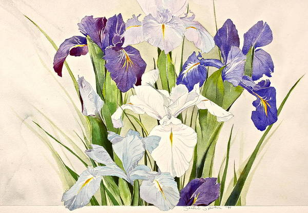 Purple Iris Mixed Media - Blue Irises-posthumously Presented Paintings Of Sachi Spohn  by Cliff Spohn
