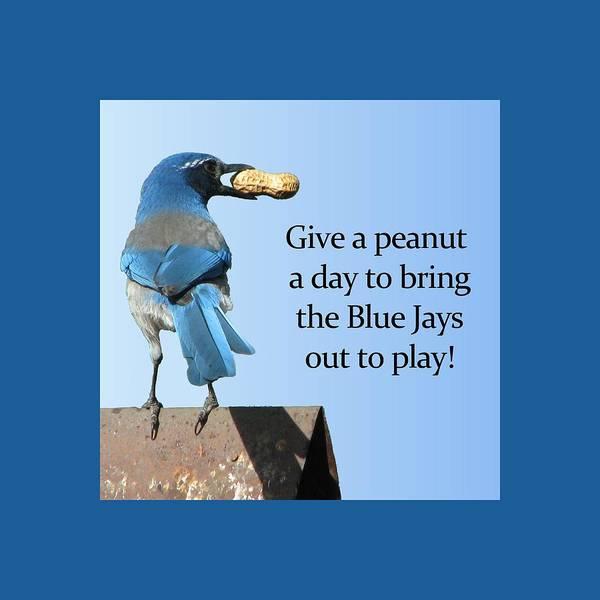 Mixed Media - Blue Jay And A Peanut by Patricia Barmatz