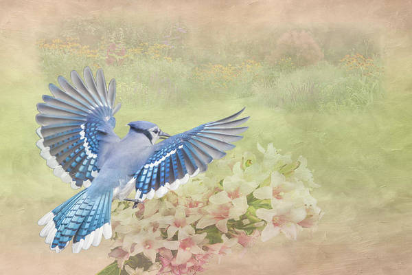 Photograph - Blue Jay Garden by Patti Deters