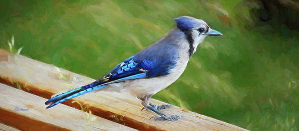 Park Bench Digital Art - Blue Jay On Bench by Garland Johnson