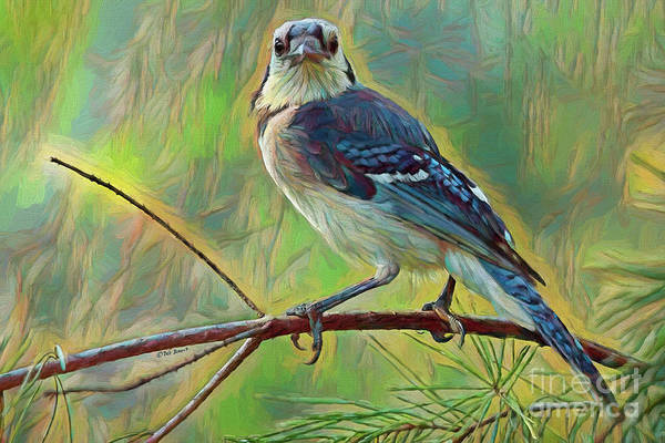 Wall Art - Painting - Blue Jay Painterly Beauty by Deborah Benoit