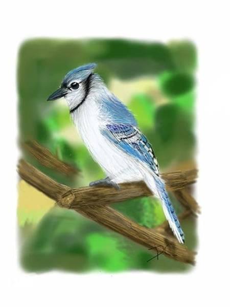 Digital Art - Blue Jay Study by Darren Cannell