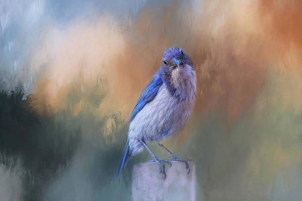 Bird Watching Digital Art - Blue Jay Visit by Terry Davis