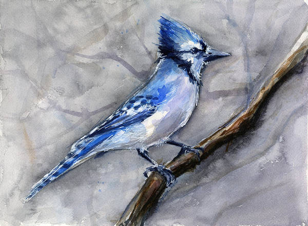Animal Watercolor Wall Art - Painting - Blue Jay Watercolor by Olga Shvartsur