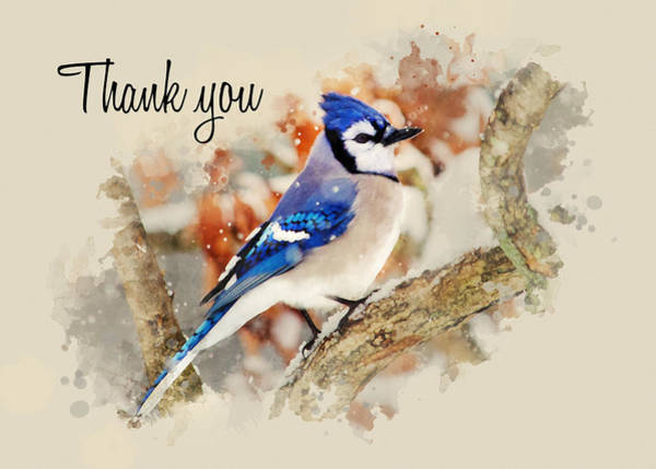 Bird Watercolor Mixed Media - Blue Jay Watercolor Thank You Card by Christina Rollo