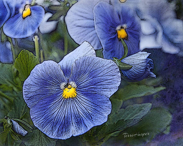 Photograph - Blue Ladies by Terri Harper