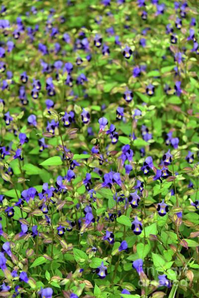Wall Art - Photograph - Blue Little Flowers by Svetlana Sewell