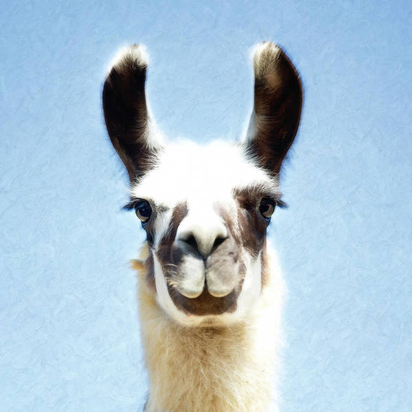 Photograph - Blue Llama by Sue Collura