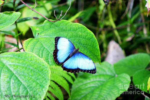 Photograph - Blue by Marty Gayler