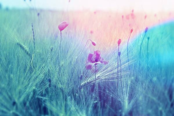 Photograph - Blue Meadow by Joy of Life Art