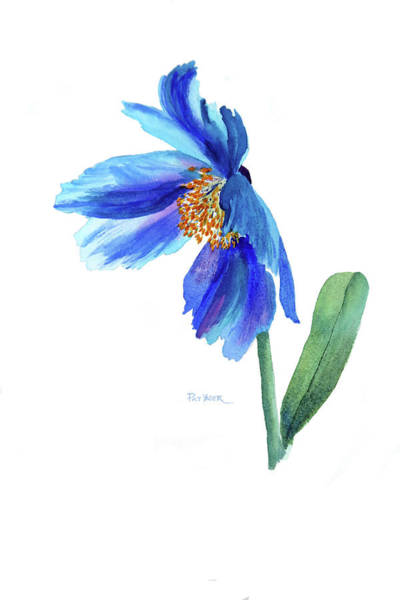 Wall Art - Painting - Blue Meconopsis Poppy by Pat Yager