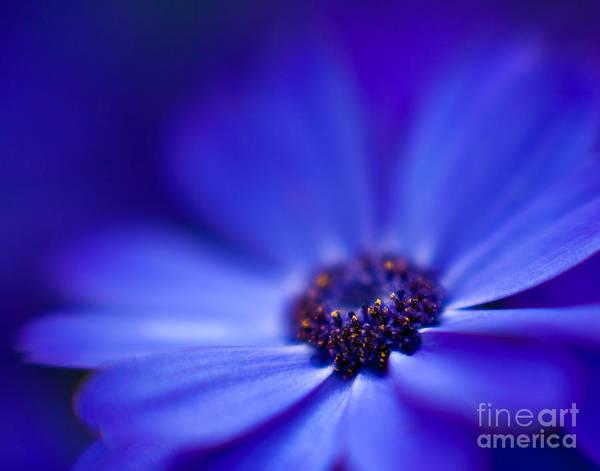 Gerbera Daisy Photograph - Blue by Mike Reid