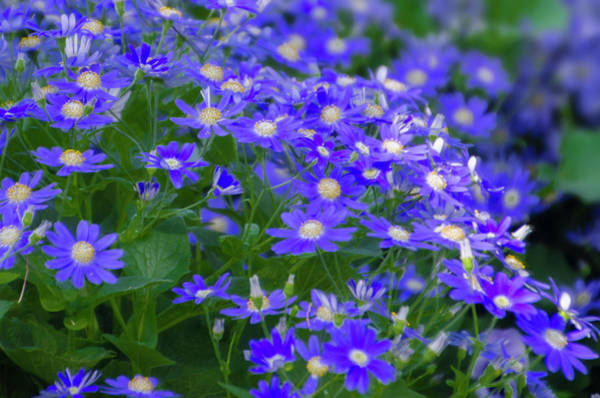 Photograph - Blue Mood by Bill Cannon