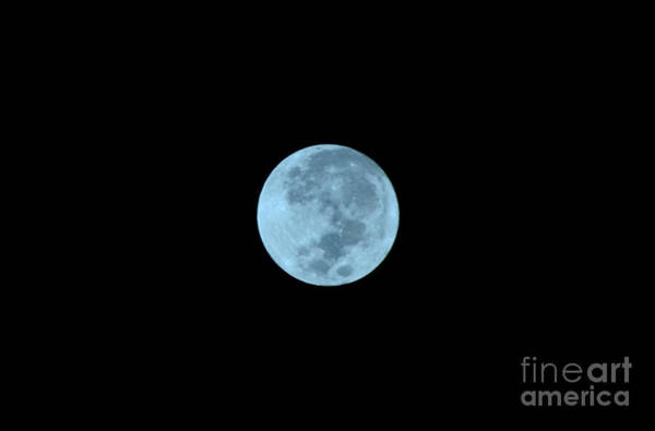 Photograph - Blue Moon by Christopher Shellhammer
