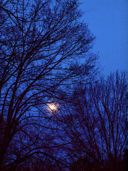 Photograph - Blue Moon by Randy Sylvia