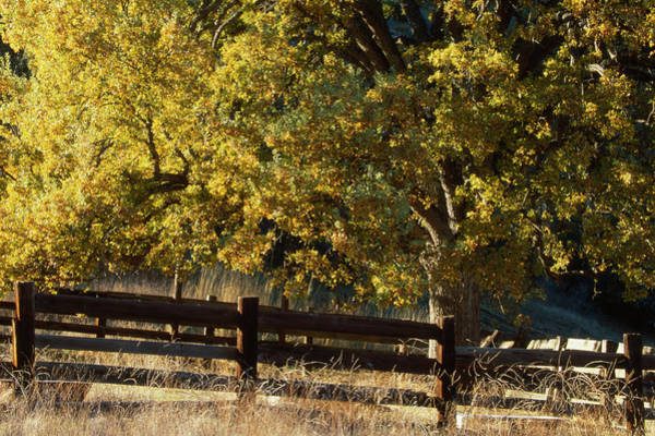 Manzana Wall Art - Photograph - Blue Oak - Sunset Valley Road by Soli Deo Gloria Wilderness And Wildlife Photography