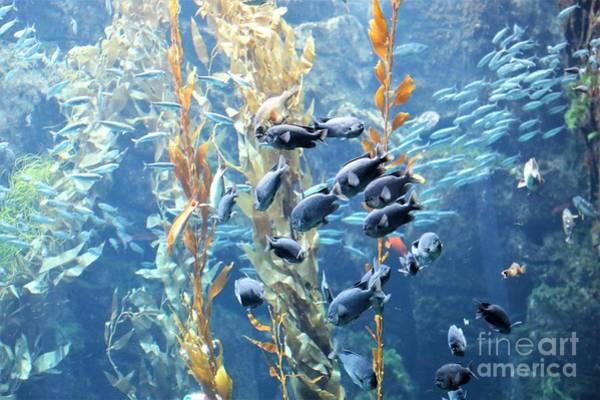 Fish Tank Photograph - Blue Ocean Fish Underwater  by Chuck Kuhn