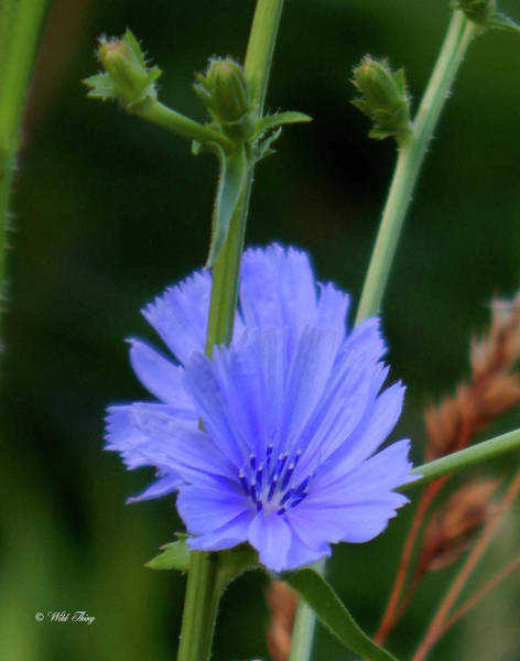 Photograph - Blue On Blue by Wild Thing