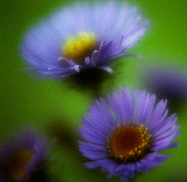 Photograph - Blue On Green 2 by Lee Santa