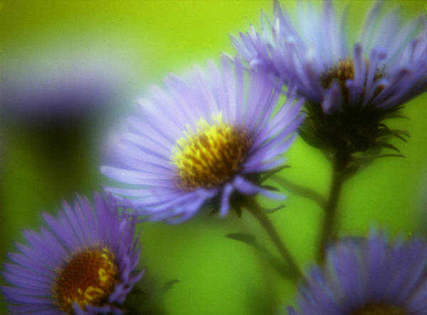 Photograph - Blue On Green by Lee Santa