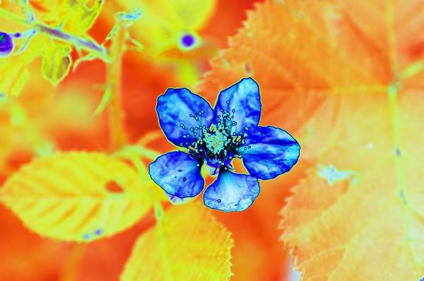 Photograph - Blue On Yellow by Richard Henne
