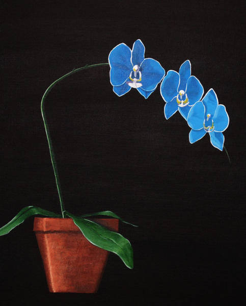 Wall Art - Painting - Blue Orchid In Pot by Candace Shockley