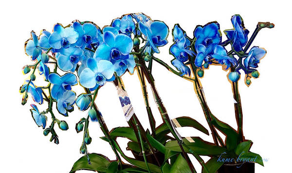 Houseplant Mixed Media - Blue Orchids by Kume Bryant