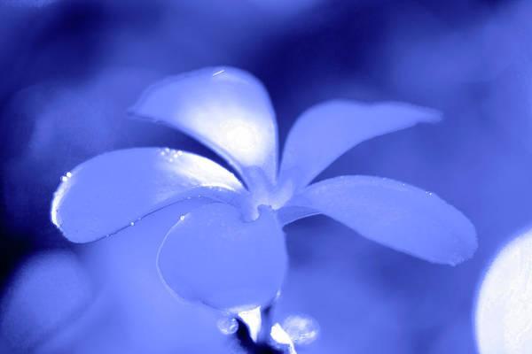 Wall Art - Photograph - Blue Petals by Sean Davey