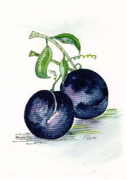 Wall Art - Painting - Blue Plums by Melody Allen