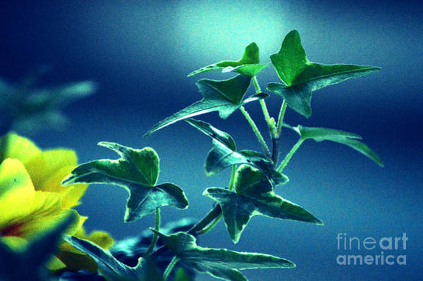 Wall Art - Photograph - Blue Power  by Susanne Van Hulst
