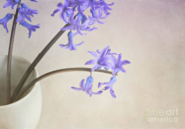 Wall Art - Photograph - Blue Purple Flowers In White China Cup by Lyn Randle