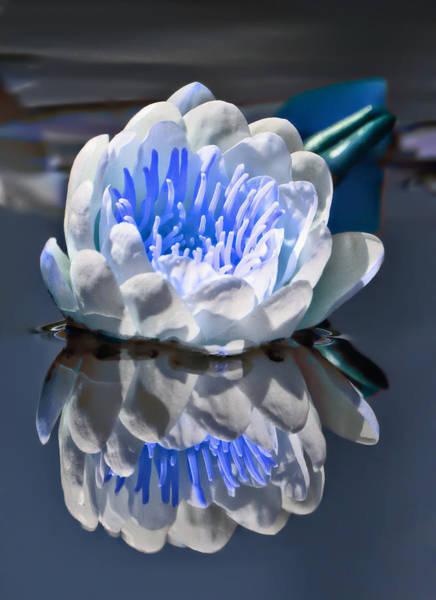 Photograph - Blue Reflections by Wes and Dotty Weber