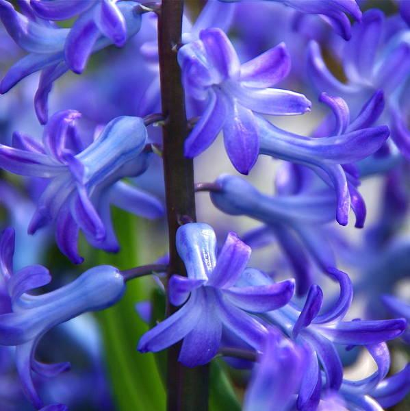 Photograph - Blue Rhapsody by Byron Varvarigos