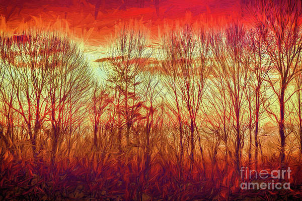 Groundhog Painting - Blue Ridge Mountain Winter Trees At Sunrise Ap by Dan Carmichael