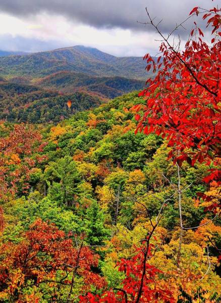 Photograph - Blue Ridge Mountains Fall Color by Dan Sproul
